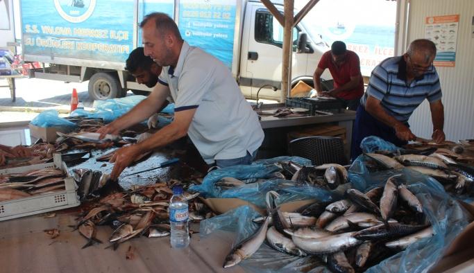 Karataş, ''500 kilogram balık ikram edeceğiz''
