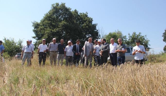 Çavuşköy'de buğday tarla günü düzenlendi