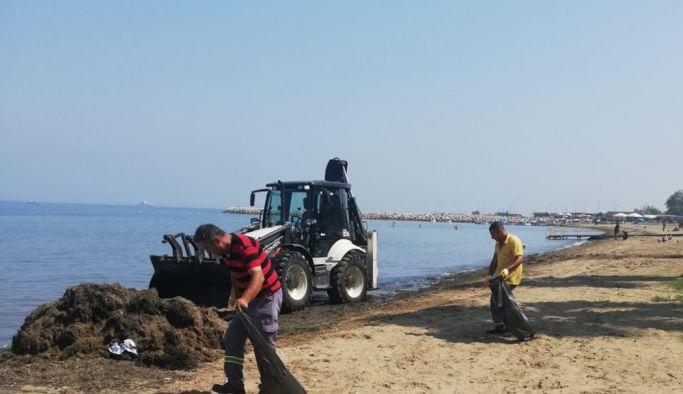 Doğu ve Batı Sahil Bandında yosunla mücadele devam ediyor
