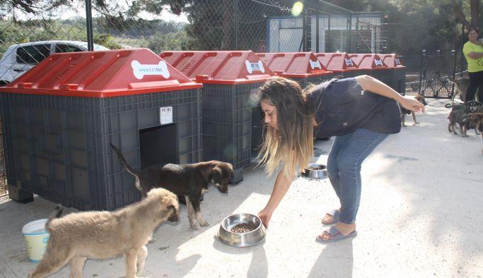 Barınağa 20 adet köpek kulübesi