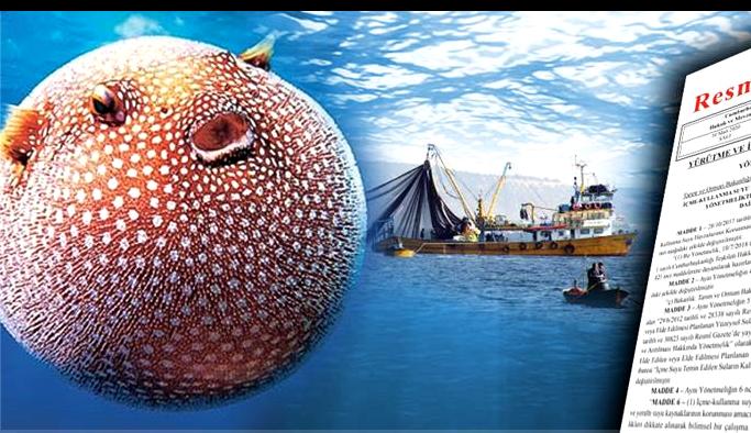 Balon balığı avlayana kuyruk başına 5 TL destek
