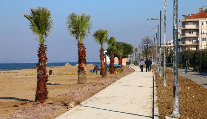 Palmiyeler doğu sahil bandında