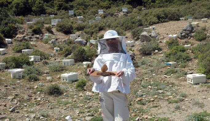 Arıcılıkta, dünyadaki ilkler İzmir'de uygulanıyor