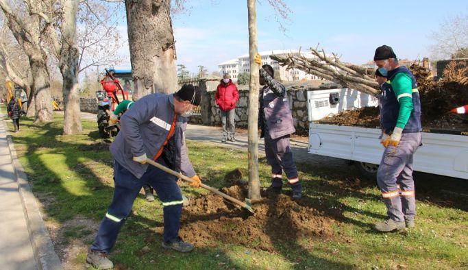 Belediye ağaçları başka yerde değerlendirecek