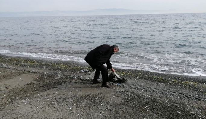 Halk plajında bakım ve temizlik çalışmaları başladı