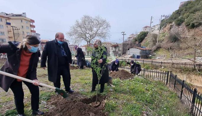 MHP Kadınları, ağaç dikti