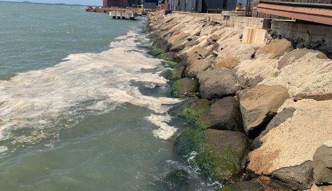 Alg Patlaması nedeniyle deniz kirliliği yaşanıyor