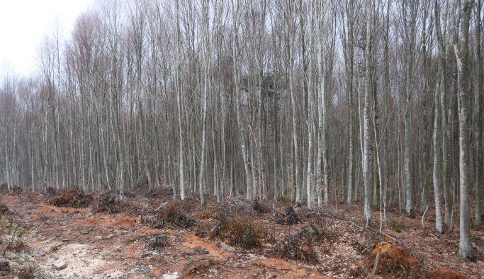 Ormanlara giriş de yasaklandı