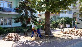 Anıt ağaçlar için volkanik cüruf