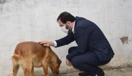 4,5 ton köpek maması dağıtıldı