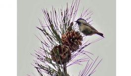 Hersek Lagünü'nde kuş türü 224'e çıktı