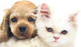 Kedi ve köpeklerde derialtı mikroçip uygulanacak