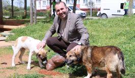 Yalova Belediyesi sokak hayvanlarını unutmuyor