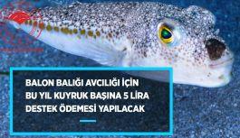 Bakanlık Balon Balığı avcılığını destekliyor