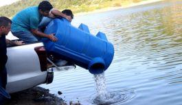 Göletlere 70 bin yavru sazan balığı bırakıldı