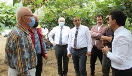 Kivi Üretiminin Geliştirilmesi projesinde 2. etap başladı