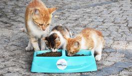 Limak Enerji'den, sokak hayvanları için mama ve su çağrısı
