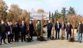 79 Çiftçiye 10.050 adet Trabzon hurması...