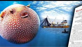 Balon balığı avlayana kuyruk başına...