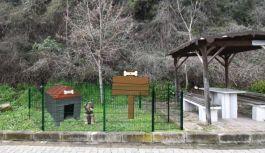 Altınova'da sokak hayvanlarına özel...