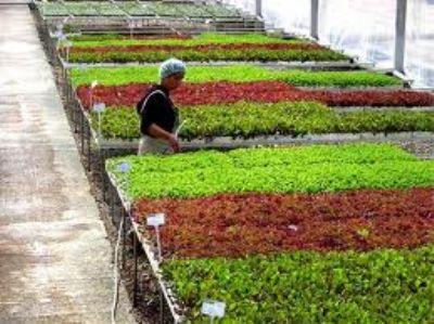 """""""Süs Bitkileri Dünyası Çiçek Kenti Yalova'da Buluşuyor"""""""