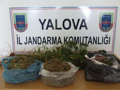 Uyuşturucu madde bulunduran ve yasadışı ekim yapan şahıslar yakalandı