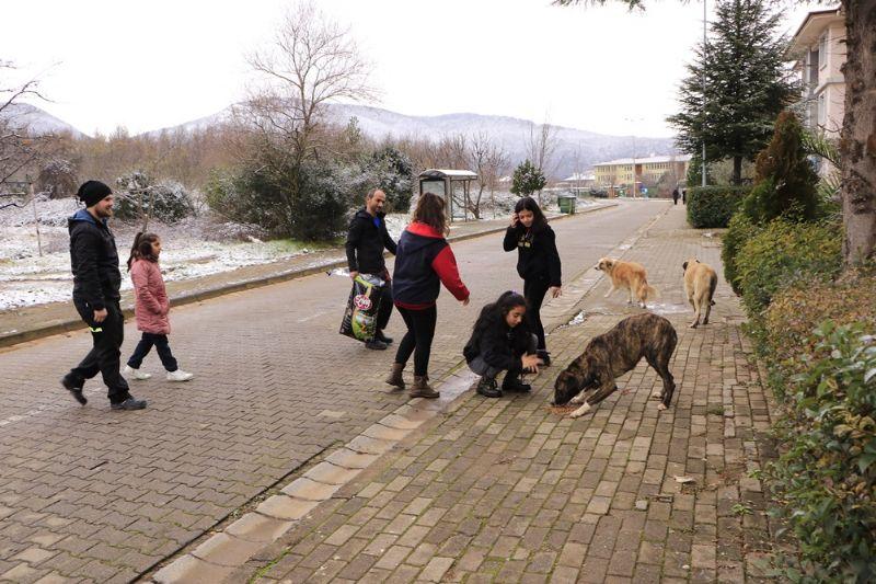 Yalova Belediyesi ve öğrenciler sokak hayvanlarını birlikte besledi
