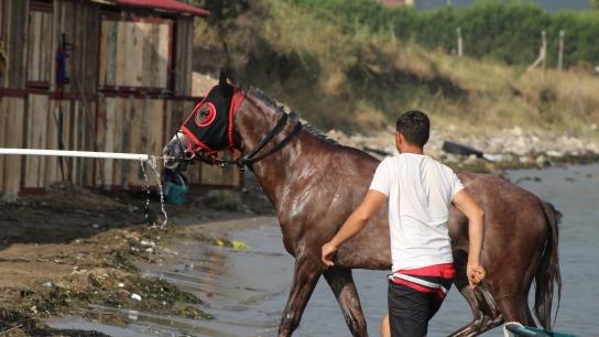 Milyonlık yarış atları, Yalova'da yüzüdürülüyor